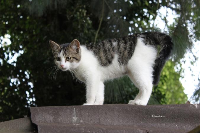 chantalharvey_wildcat