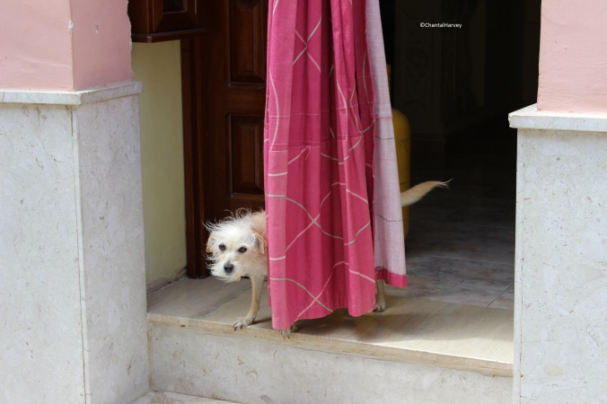 chantalharvey_Malta